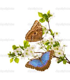 две бабочки на ветке