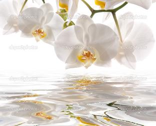 отражение белой орхидеи