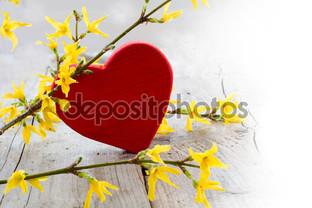 красное сердце и форзиция