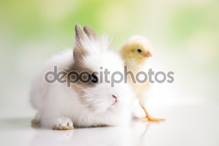 кролик и цыплёнок