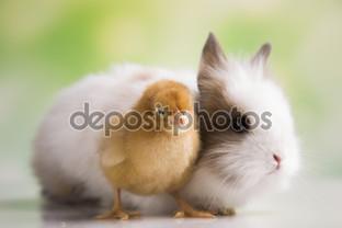 желтый цыплёнок и зайчик