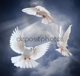 три белых голубя на фоне неба
