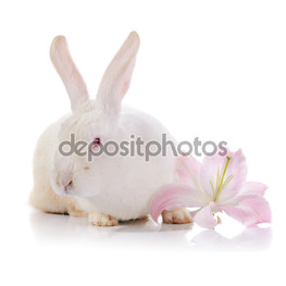 кролик и лилии