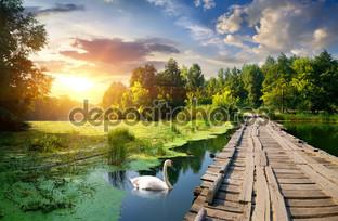 лебедь рядом мост