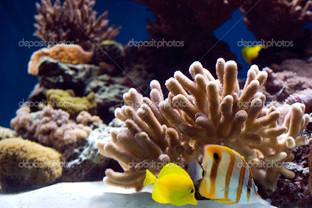 рыбы и кораллы