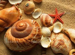 морские раковины на песке и звезда