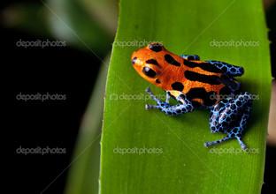 лягушка синие ноги