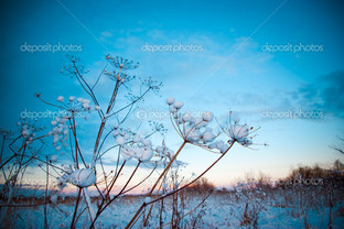 растение на голубом фоне