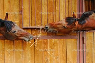 лошади давай знакомиться