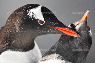 пингвин ухаживает