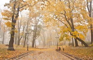 Мариинский парк в тумане Киев