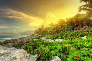 Закат в джунглях