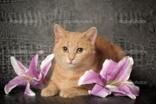 кот с лилиями