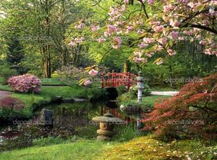 японский сад красный мостик