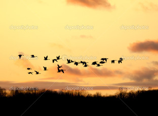 гуси летящие в закат