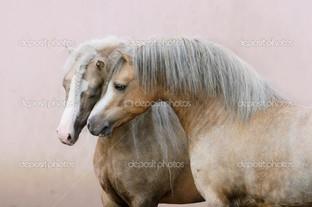 две лошади в любви