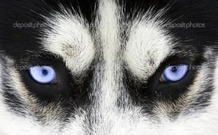 голубые глаза взгляд