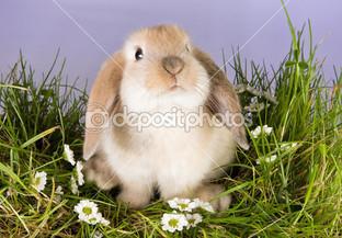 кролик на сиреневом фоне