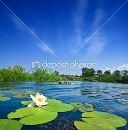 лилия листья
