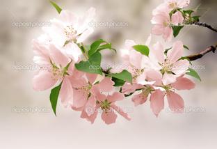 цветы на розовом