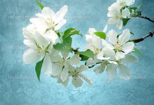 цветы на голубом