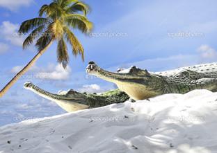 Индийские крокодилы