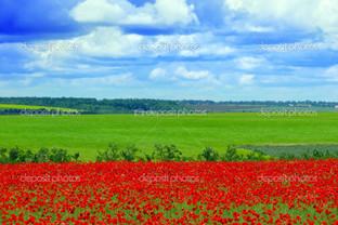 маковое поле и синее небо