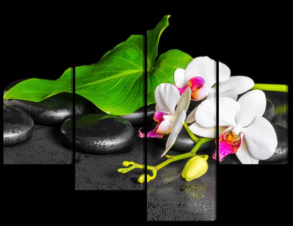 Белая орхидея на камнях