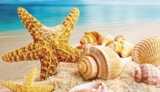 Ракушки и морская звезда
