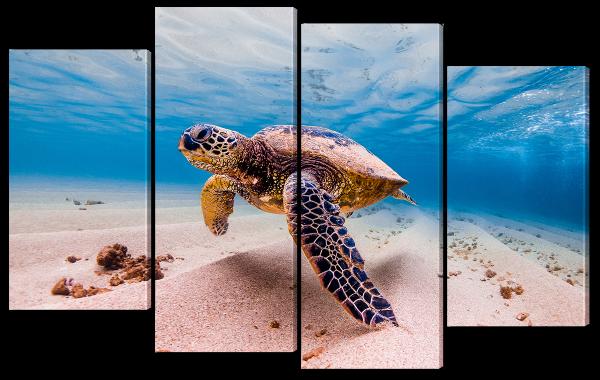 Черепаха в у морского дна