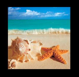Звезда и ракушка на песке