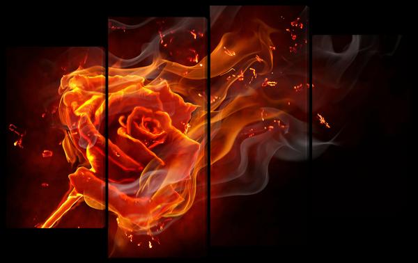 Пылающая роза