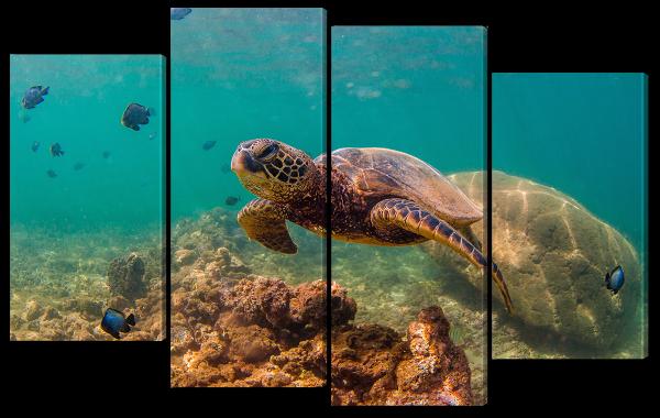 Рыбки и черепаха