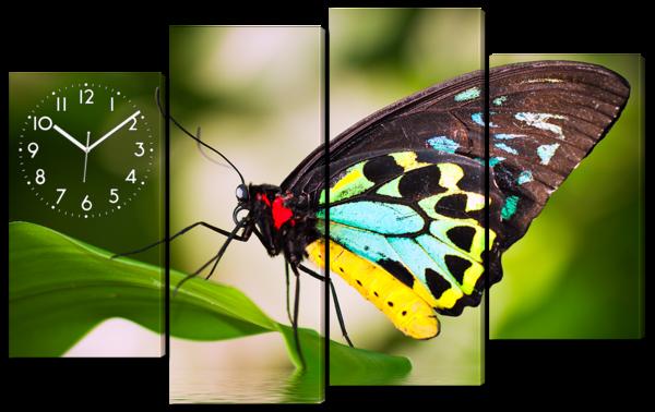 Бабочка на листве