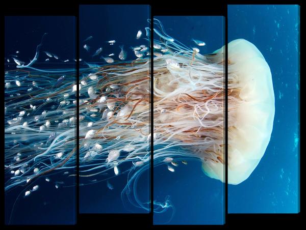 Белая медуза