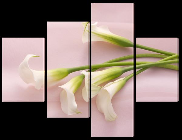 Аронник на розовом шелке