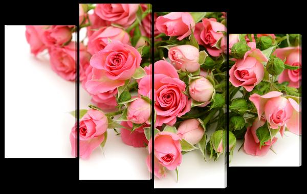Алые розы на белом фоне