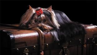 Собачка на чемодане