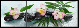 Цветы, роса и камни