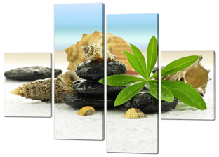 Ракушки камни