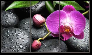 Роса и орхидея