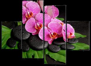 Розовые орхидеи на чёрных камнях