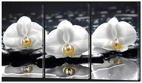 Белые орхидеи на чёрном фоне