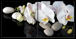 Камни и орхидея