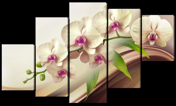 Орхидея  мотылек