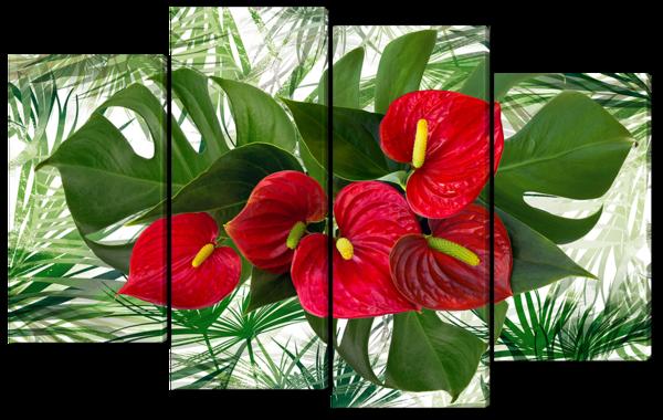 Антуриум и листва