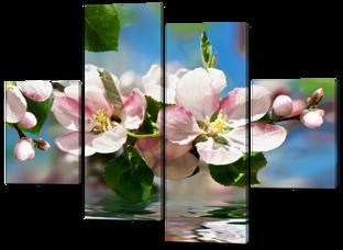 Весна цветущая вишня