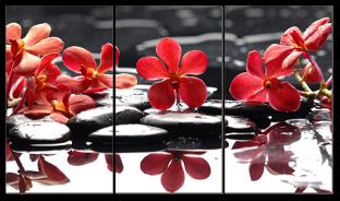 Красные цветы и камни