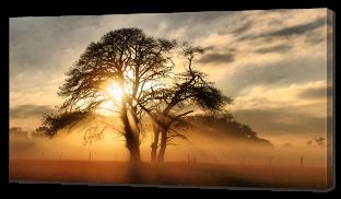 Древо на закате