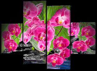 Ярко розовые орхидеи